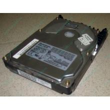 Жесткий диск 18.4Gb Quantum Atlas 10K III U160 SCSI (Ноябрьск)